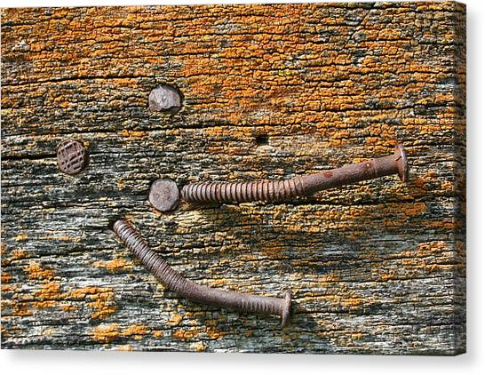 Rusty Nails On Weathered Wood Canvas Print