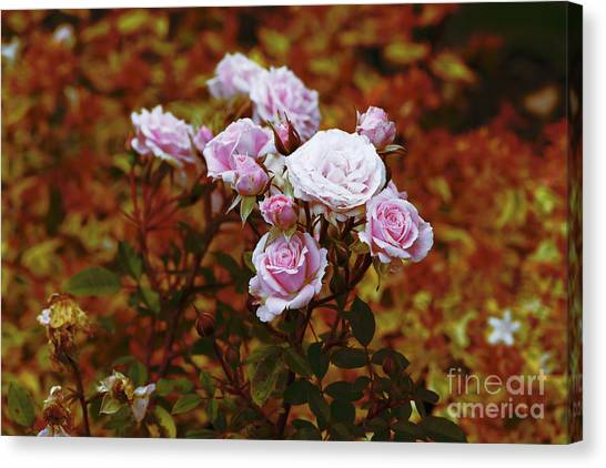 Canvas Print featuring the photograph Rusty Romance In Pink by Ivana Westin