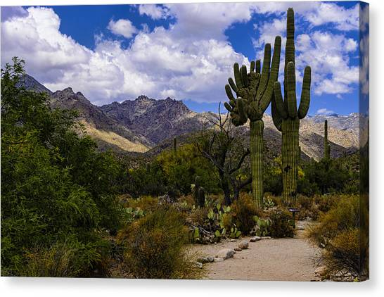 Sabino Canyon No4 Canvas Print