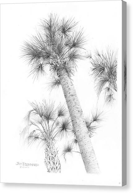 Sable Cabbage Palm Canvas Print