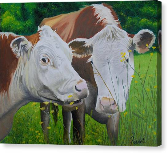 Sacred Cows Canvas Print
