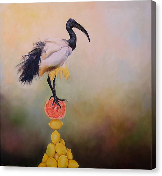 Sacred Ibis Lemon Pyramid Canvas Print by Valerie Aune