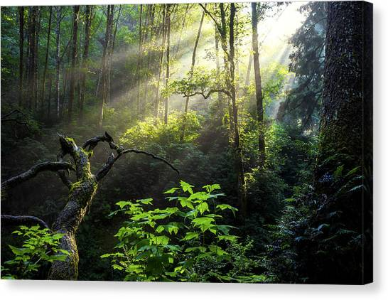 Pacific Coast Canvas Print - Sacred Light by Chad Dutson