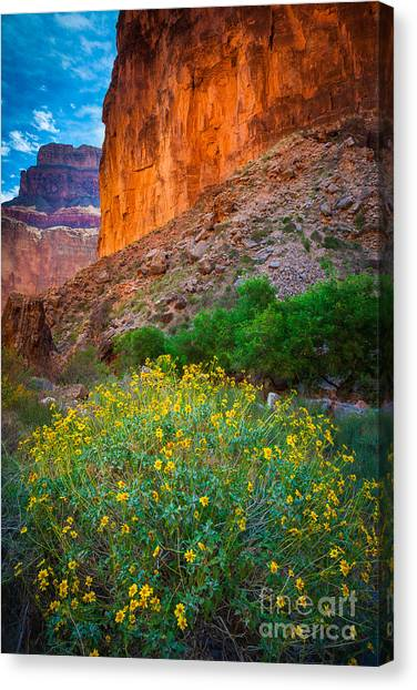 Colorado River Canvas Print - Saddle Canyon Flowers by Inge Johnsson