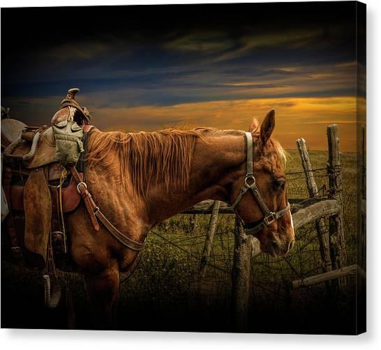 Saddle Horse On The Prairie Canvas Print