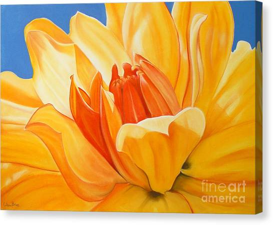 Saffron Splendour Canvas Print by Colleen Brown