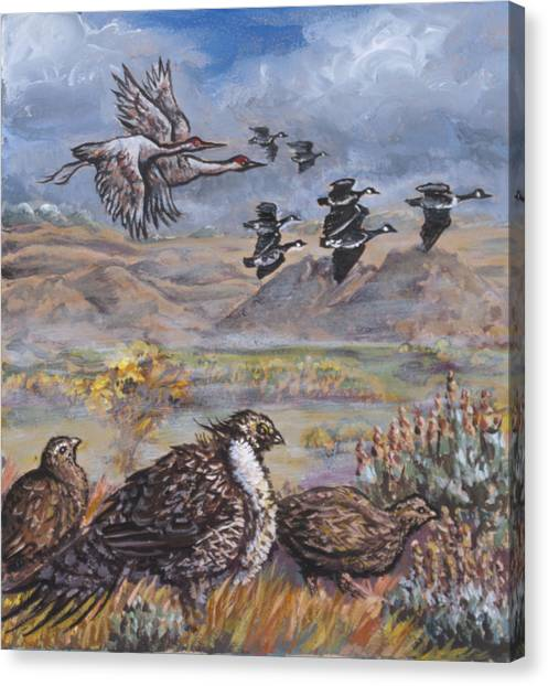 Sage Grouse Watch The Migration Canvas Print