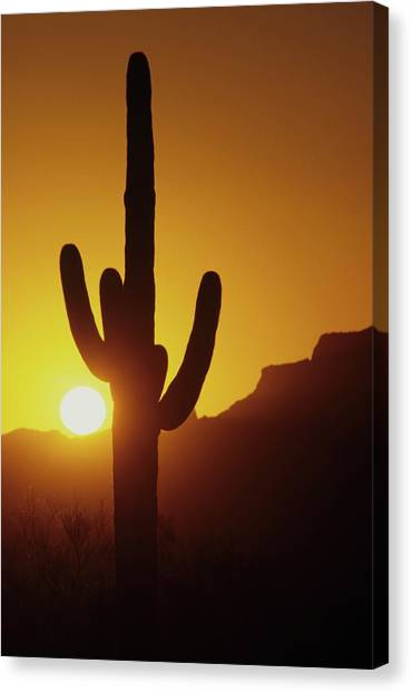 Saguaro Cactus And Sunset Canvas Print