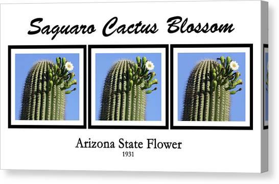 Arizona State University Asu Tempe Canvas Print - Saguaro Cactus Blossom by Kare Dey