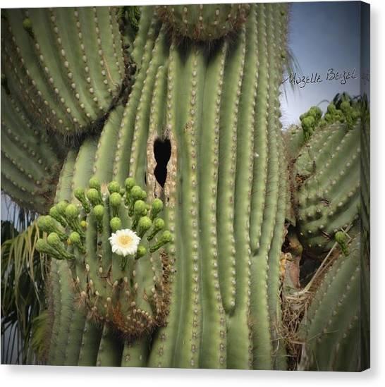 Saguaro In Bloom Canvas Print