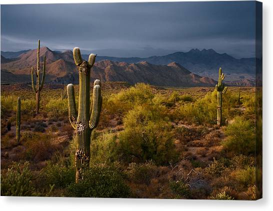 Sonoran Desert Canvas Print - Saguaro Sunset At Four Peaks Arizona by Dave Dilli