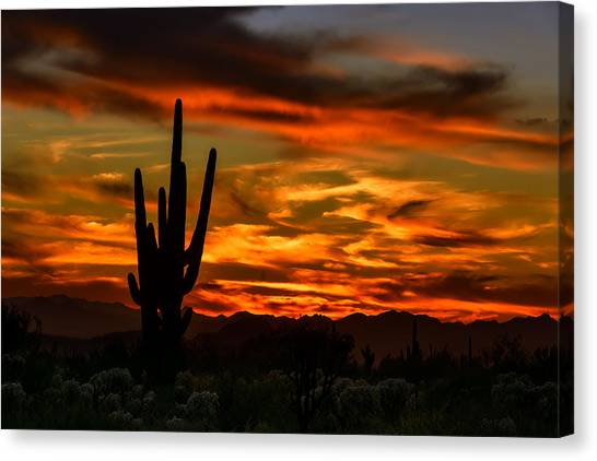Saguaro Sunset H51 Canvas Print