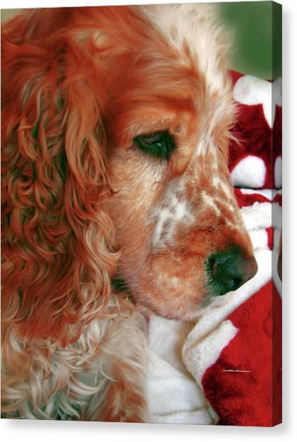 Saint Shaggy Art Photograph  14 Canvas Print