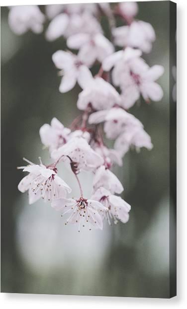 Sakura #253 Canvas Print