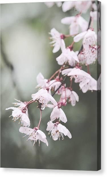 Sakura #278 Canvas Print