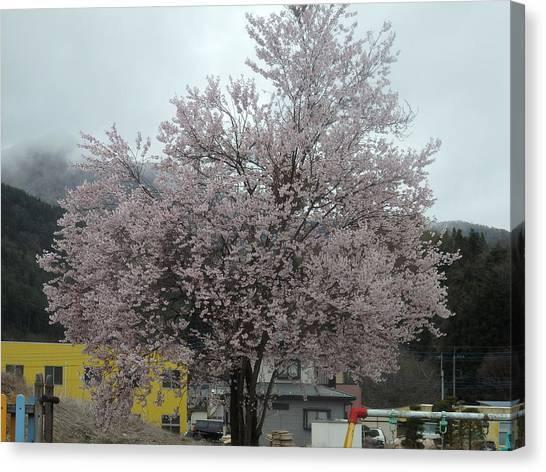 Fairies Canvas Print - Sakura, Japan's Ephemeral Also Beautiful Flowers by Kanna Fairy