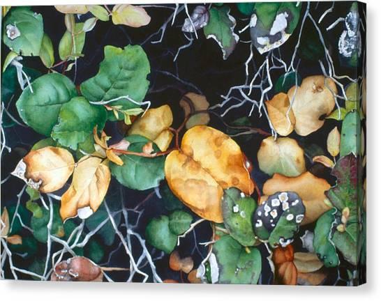 Salal Canvas Print