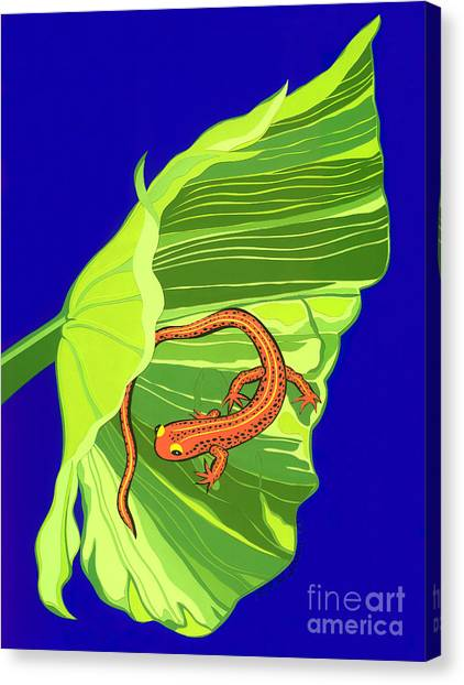 Salamander Canvas Print by Lucyna A M Green