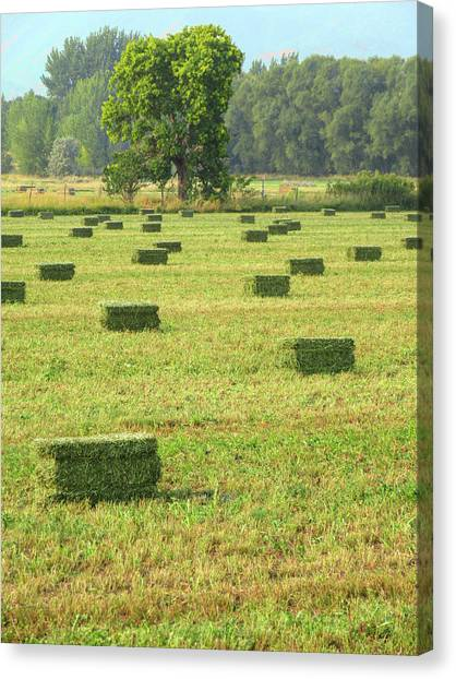 Salem Hay Field Canvas Print
