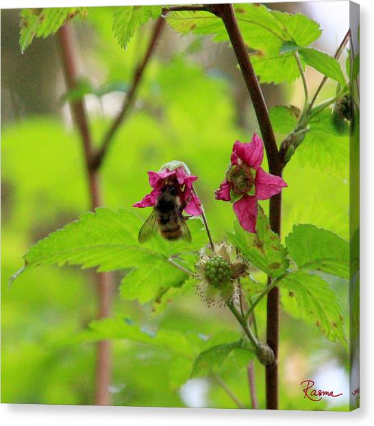 Salmonberry Honey Canvas Print