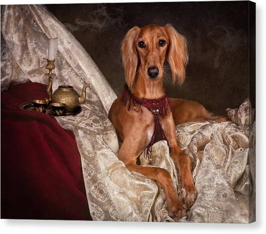 Canvas Print - Saluki Dog by Tanya Kozlovsky