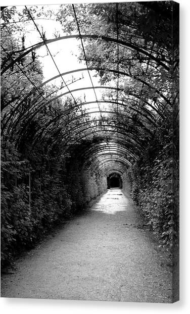 Tunnels Canvas Print - Salzburg Vine Tunnel - By Linda Woods by Linda Woods