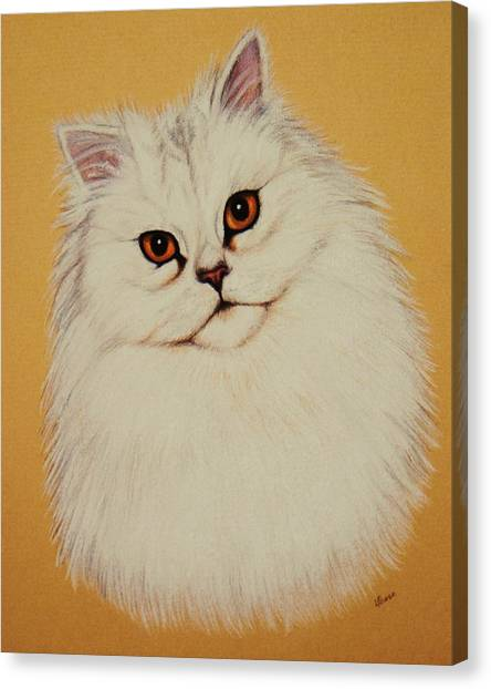 Sam - Persian Cat Canvas Print by Lucy Deane