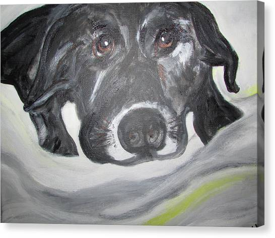 Sweet Sami Black Lab Canvas Print