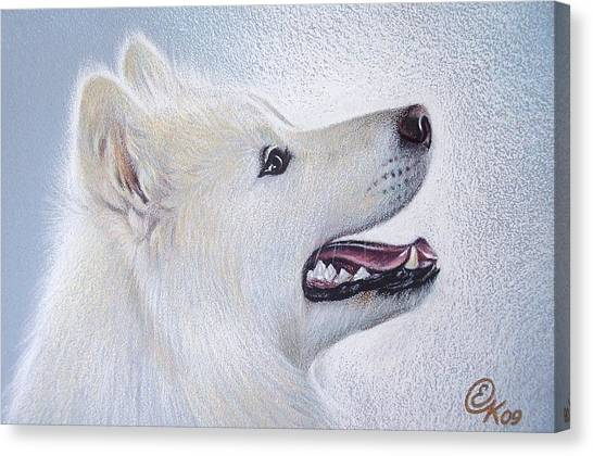Samoyed Canvas Print