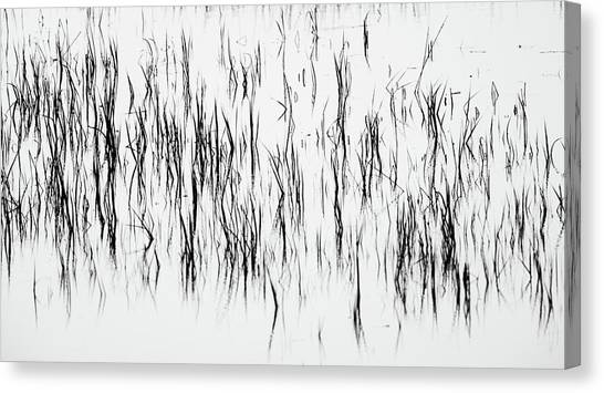 San Diego River Grass In Black And White Canvas Print