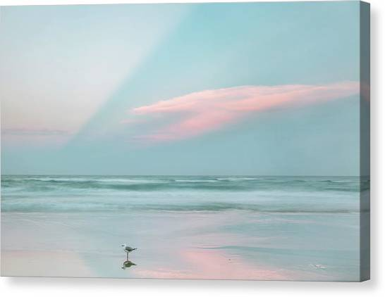Seagulls Canvas Print - Sanctuary by Az Jackson