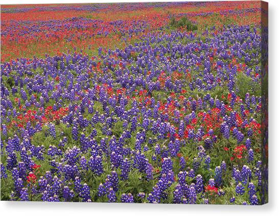 Canvas Print featuring the photograph Sand Bluebonnet And Paintbrush by Tim Fitzharris