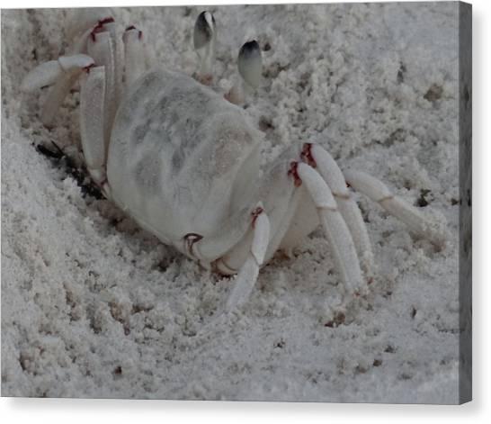 Exploramum Canvas Print - Sand Crab by Exploramum Exploramum