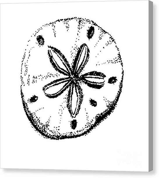 Sand Dollar Canvas Print