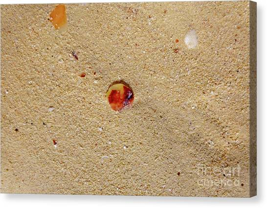 Canvas Print - Sand Shell Art by Francesca Mackenney