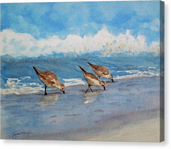 Sanderlings Canvas Print