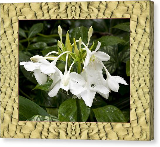 Cape Lily Canvas Print - Sandflow Lilies by Bell And Todd