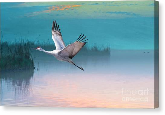 Sandhill Crane Canvas Print - Sandhill Crane And Misty Marshes by Laura D Young