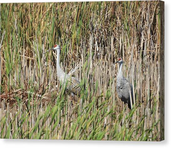 Canvas Print - Sandhill Crane by Red Cross