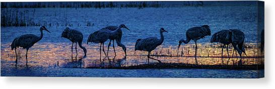 Sandhill Cranes At Twilight Canvas Print