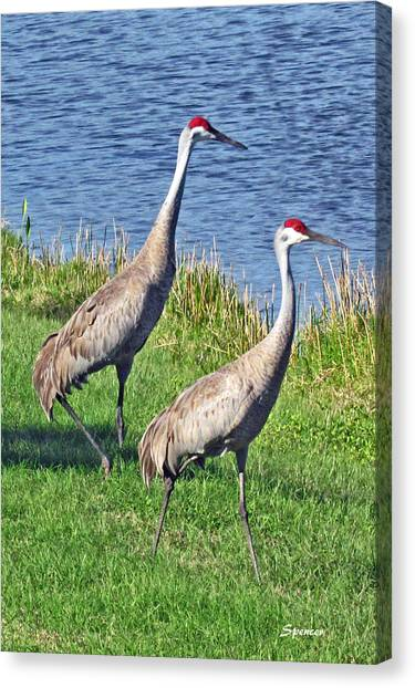 Sandhill Pair Canvas Print
