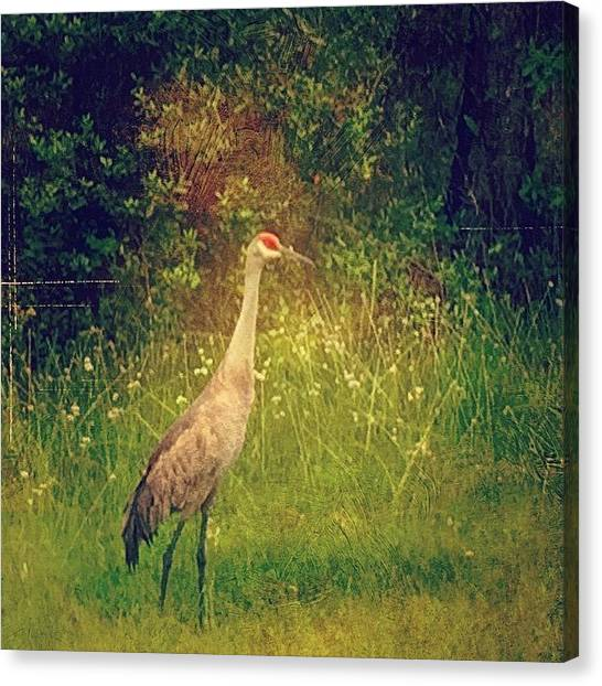 Wildlife Canvas Print - Sandhills Crane On The Side Of The by Joan McCool