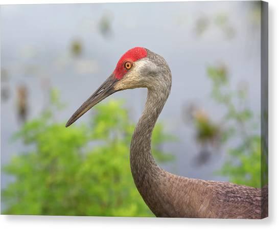 Ornithology Canvas Print - Sandie Profile by John M Bailey