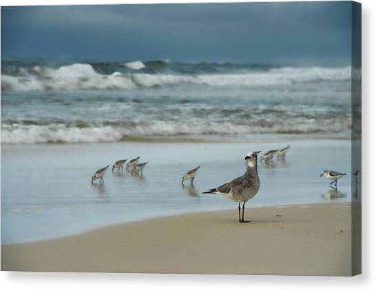 Sandpiper Beach Canvas Print