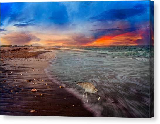 Fleas Canvas Print - Sandpiper Sunrise by Betsy Knapp