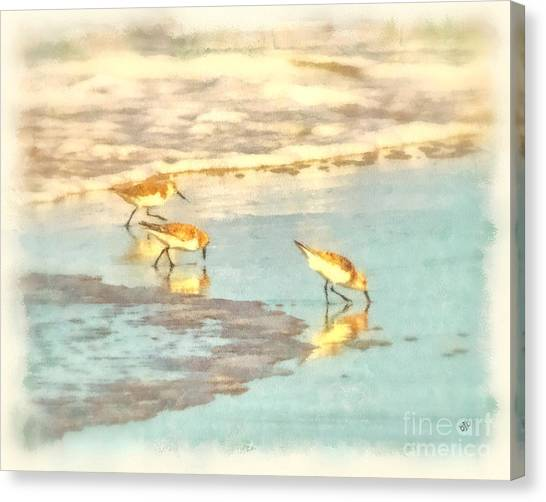 Sandpipers Along The Shoreline Canvas Print