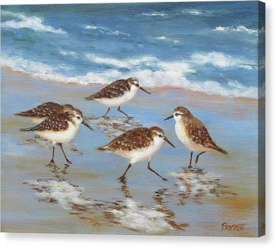 Florida Wildlife Canvas Print - Sandpipers by Barrett Edwards