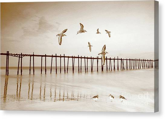 Sandpipers Canvas Print - Sandpipers In Sepia by Laura D Young