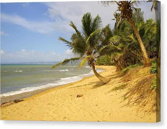 Sandy Beach II Canvas Print