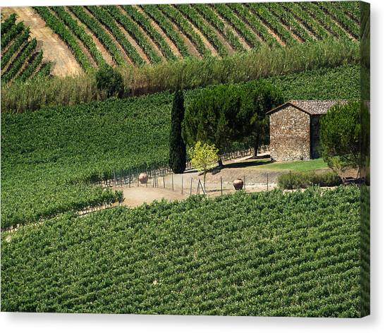 Sangiovese Vineyard Canvas Print